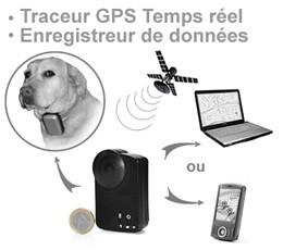 Collier Traceur GPS temps reel et enregistreur de données pour animaux domestiques