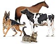 Balises GPS pour animaux domestiques, animaux d'élevage