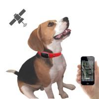 Collier traceur GPS temps réel sans abonnement pour animaux