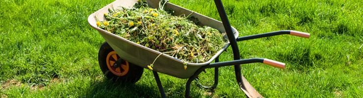 Une brouette pleine d'herbe fraichement coupée